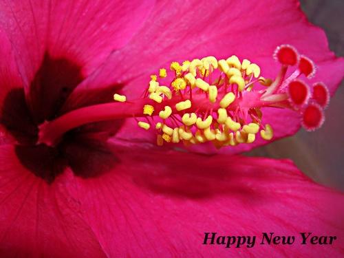 happy new year by evelen