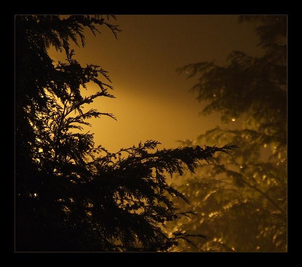 Streetlight by cattyal