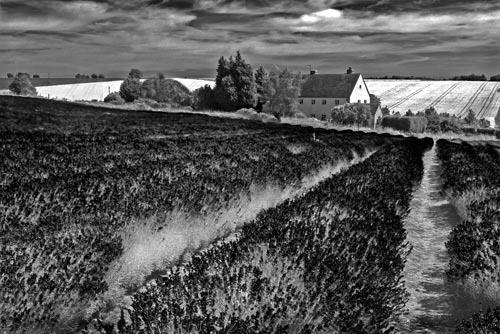 Lavender Hill by gpwalton