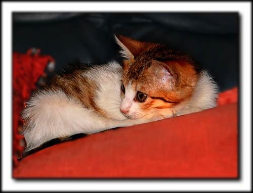 Noel by Paul_cats