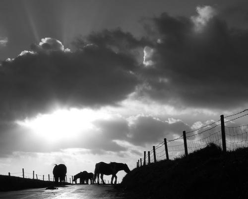 Pony Cloud by Declanworld