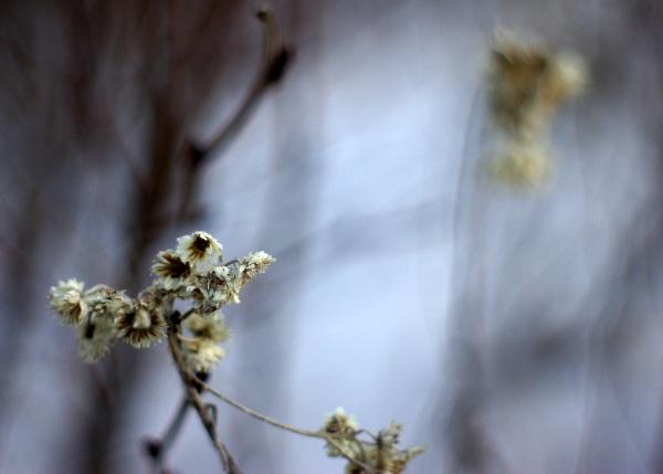 winter flower by sputnki