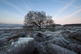 Lawrence Field Tree