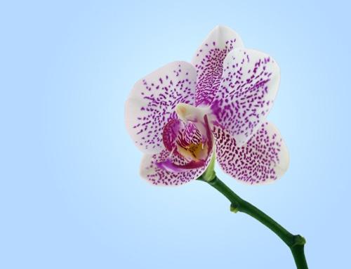 Orchid by fredforsyth