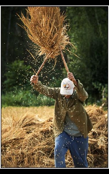 Beating Rice by TonyA