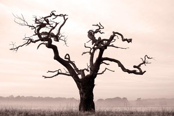 gnarled tree - mono by arpix