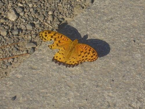 The Broken Butterfly by EMMA1