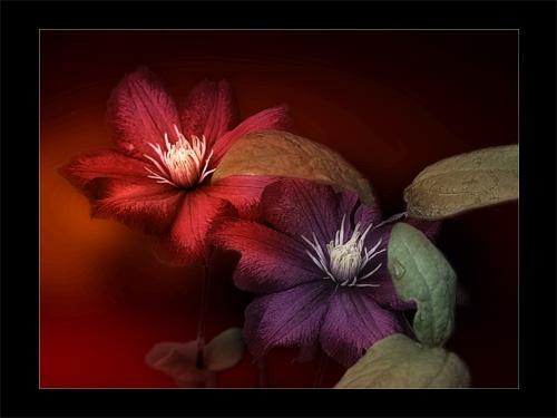 Flowers by Juliet