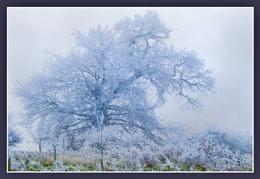 ice tree1