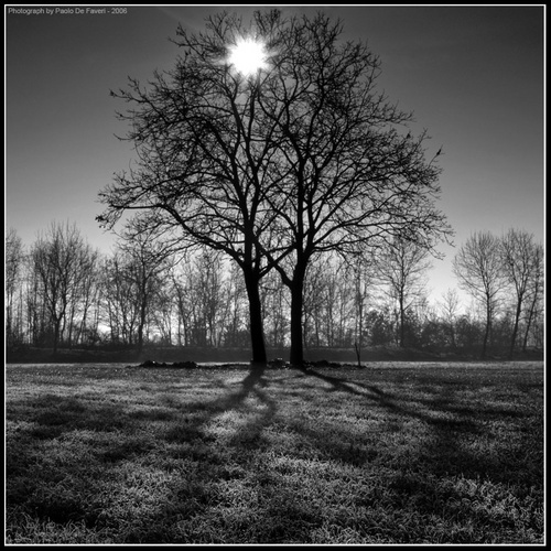 Web of light. The countryside around Carignano, Piedmont, Italy. BW version. by paolodefaveri