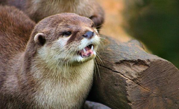otter by Blueprint