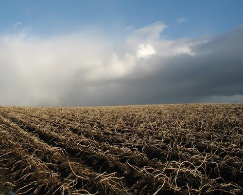 Spud Field by Declanworld