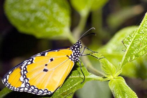 london butterflies by ala_fred