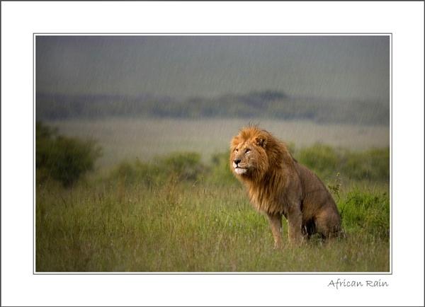 African Rain by stevie