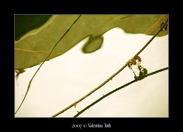 Boat Ropes 2 by yuno
