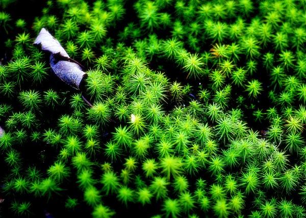 leaf and moss by sputnki