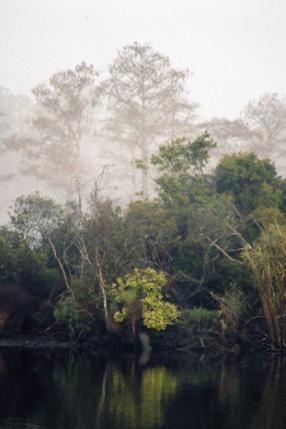 foggy winter morning by tarara