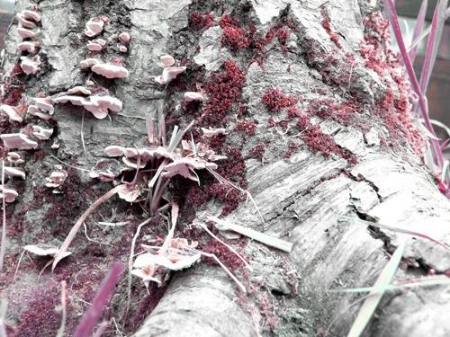 fungi by sharonf