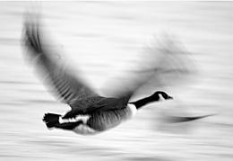 Slow flight in low light