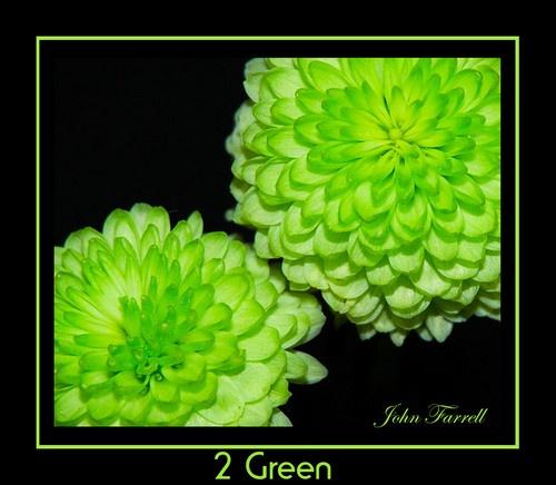 2 green by Kwosimodo