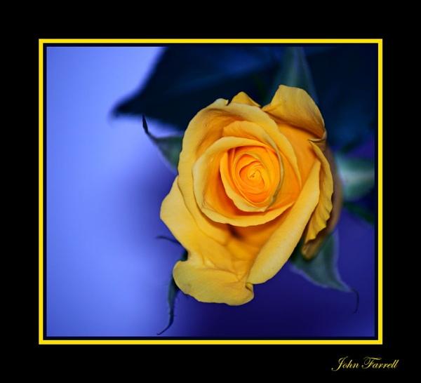 Bloom by Kwosimodo