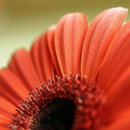 Flower by garymcparland