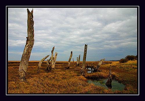 Dead Wood 2 by Stewy
