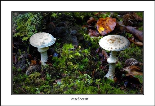 Mushrooms by essien