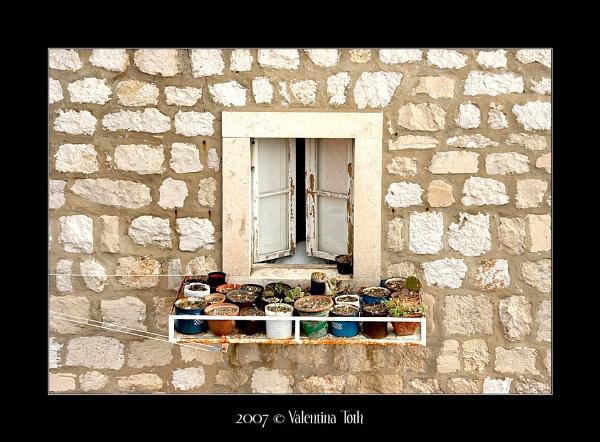 Window cactii by yuno