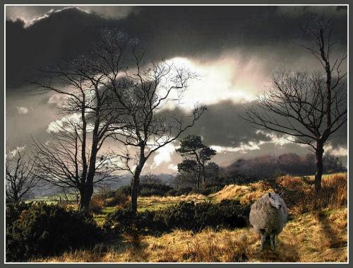 Lone ranger by lancs-lad
