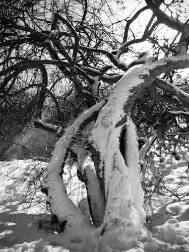 Tree by Graham_Aylard