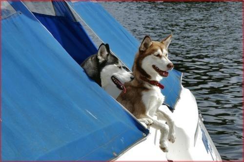 Alaskan Boatguards by jerry harwood