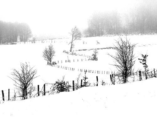 Fields in Limousin by jeff50