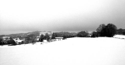 Limousin snow scene by jeff50