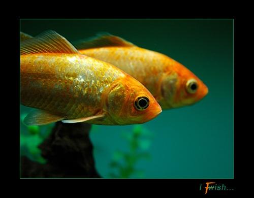 I fish wish... by wiktorg