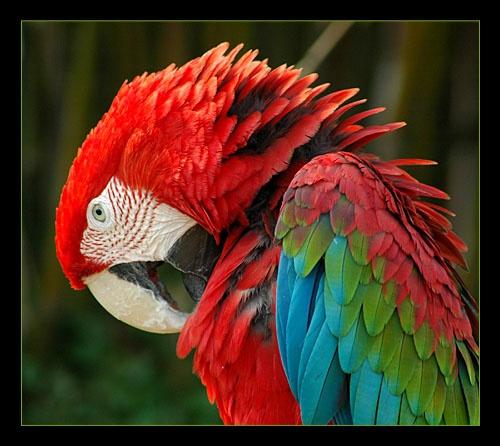RGB bird by wiktorg