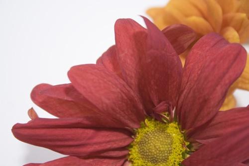 Pink flower by marietafs