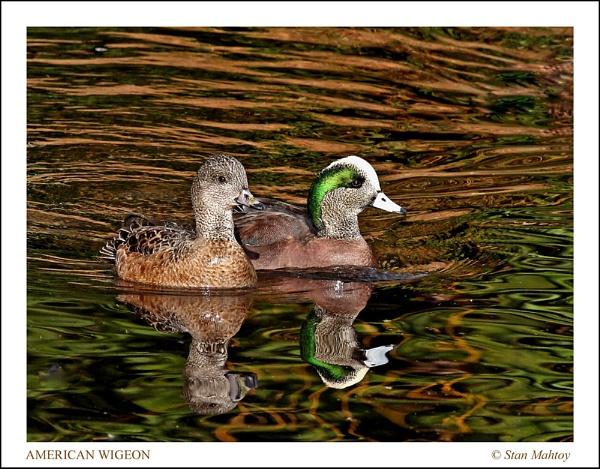 On Golden Pond by alpha788