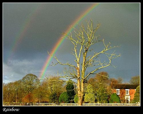 Rainbow by Deego