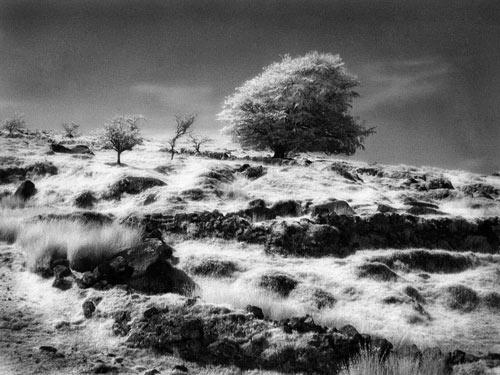 Mysterious Moor by gpwalton