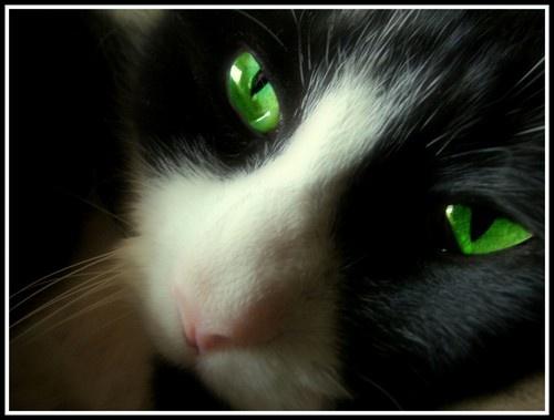 cats eyes by Simon-Gimson