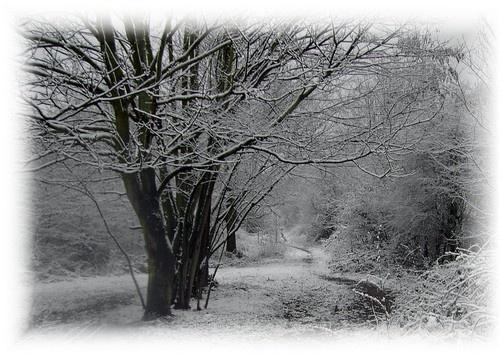 winter by snapperbryan06