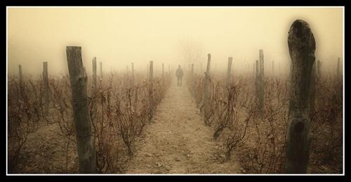 The Vineyard by ovidiusoleriu