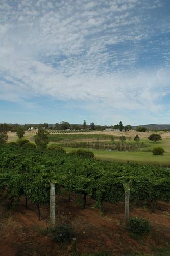 vinyards by kerri84