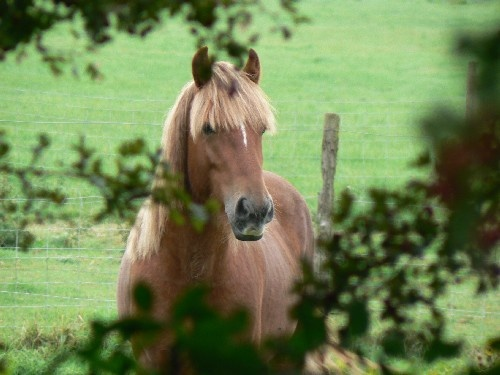 Horse in the hedgerow by fo_to