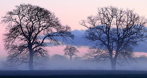 Winter Mist by psiman