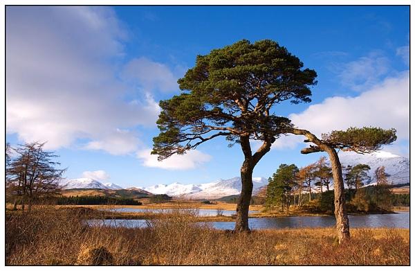 Pines, Loch Tulla. by johnc1711