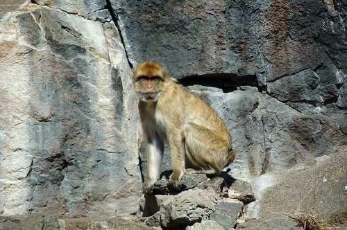 Monkey by scotcav