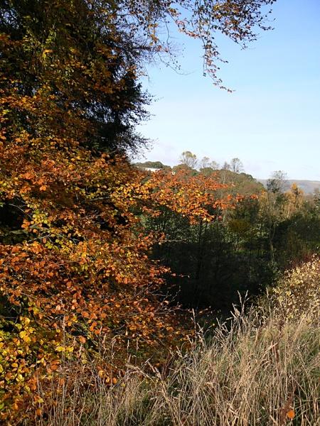 Bannockburn Glen by Jamawa