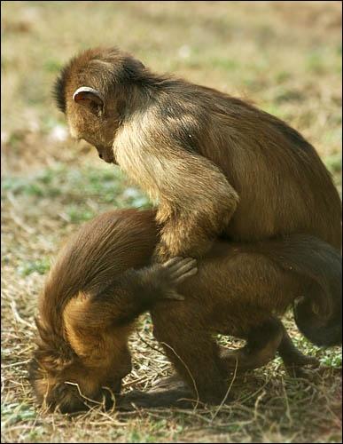 Monkey lovin\' by wiktorg